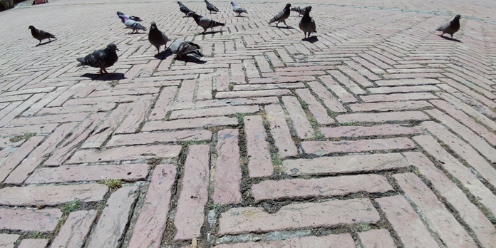 Pigeons and bricks